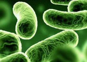Mycobacterium 2